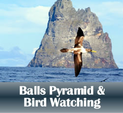 balls pyramid bird watching